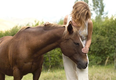 Good treat and horse sensitivity