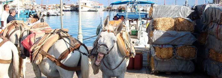 Curiosidades de los caballos y la isla de Hydra