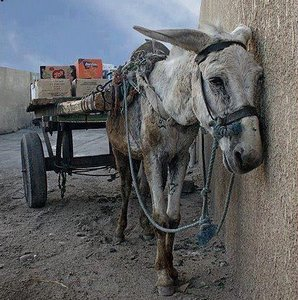 Maltrato de caballos