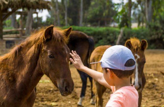 Traumatized horses