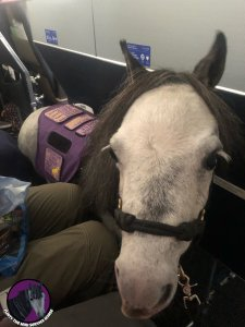 Flirty horse