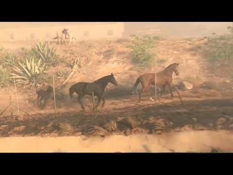 A horse saves its family from a fire