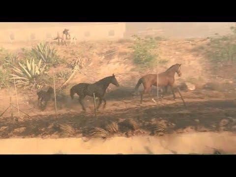 caballo salva a su familia