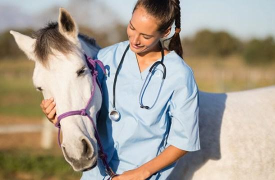Horse and Veterinarian