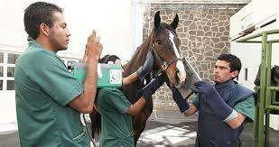 Médicos veterinarios atendiendo un caballo