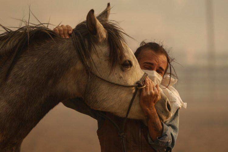 Owner comforts his horse