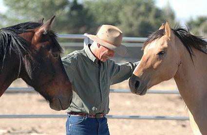 Horses with traumas