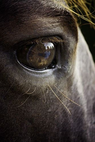 The eyes of the horse