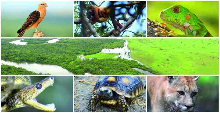 Biodiversity in Wildlife of Venezuela