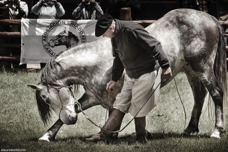 El caballo lusitano