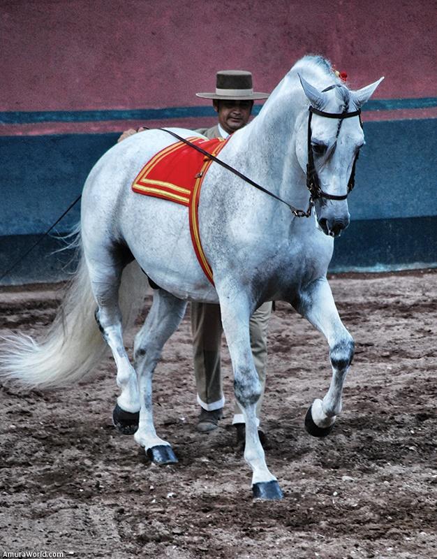 El caballo lusitano y su jinete