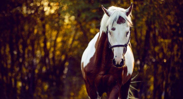 El temperamento del caballo y su caracter
