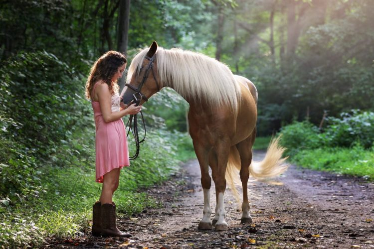 The horse as a pet