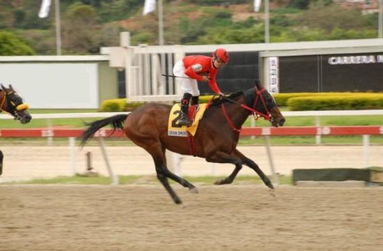 Venezuelan horse Gran Omero - Gustavo Mirabal