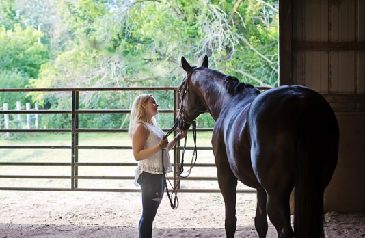 Sports performance of the equine