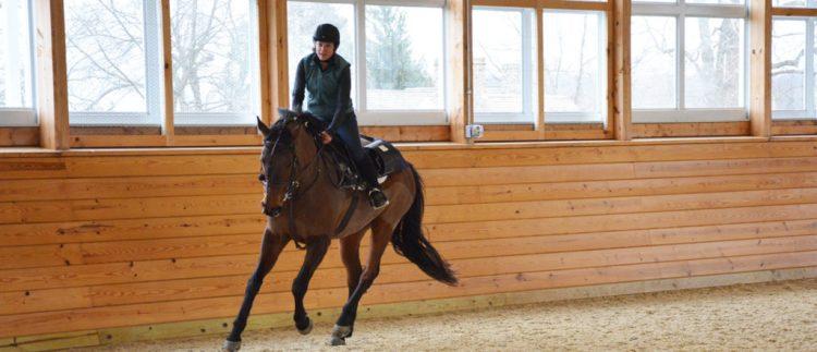 equine-performance-evaluation