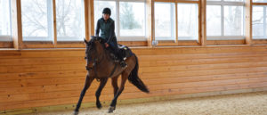 equine-performance-evaluation