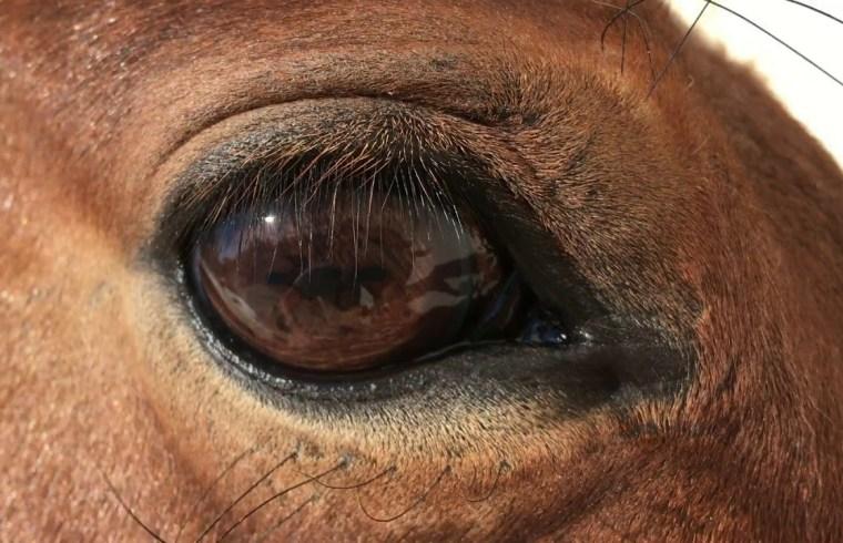 La vista de los caballos