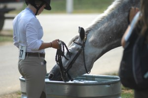 Hydration for equestrian athletes