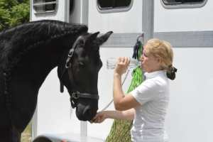 Water hydration for equestrian athletes