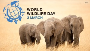 World Wildlife Day - March 3rd