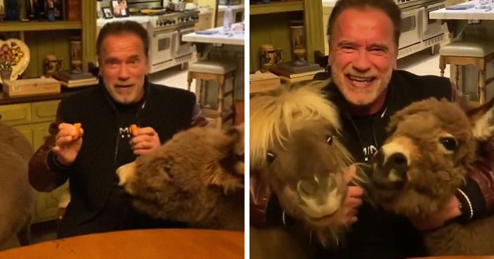 Coronavirus quarantine Arnold Schwarzenegger and his pets