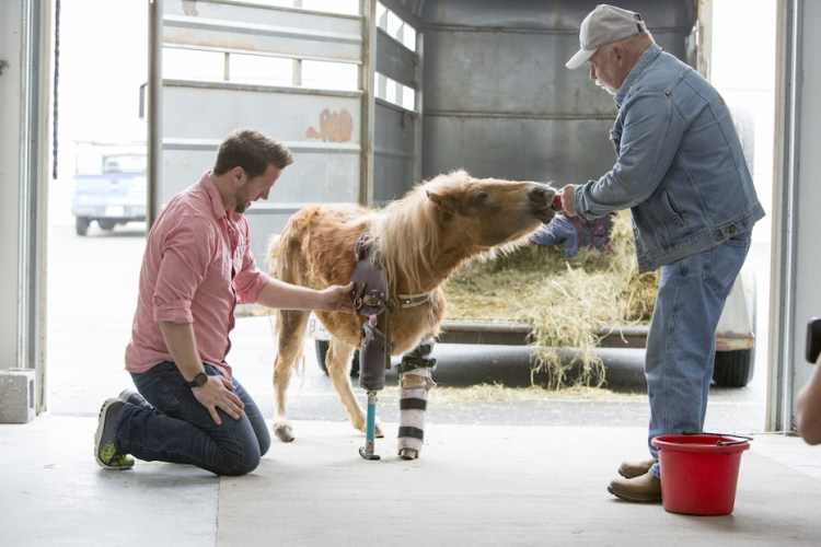Plastic prosthetics for horses