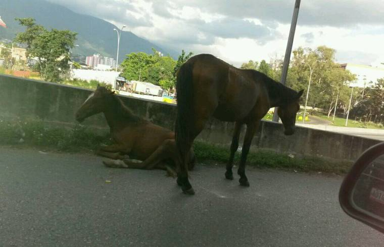 Abandoned horses in need of care