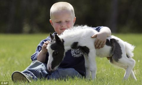 Young boy play with Einstein mini horse