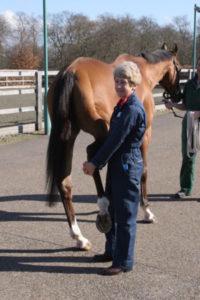 Dra. Sue Dyson en plena praxis médica con un caballo