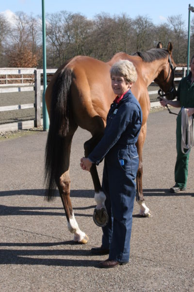 Dr. Sue Dyson in the middle of medical practice with a horse