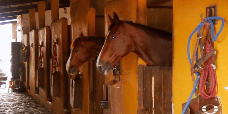 Horses quarantined by coronavirus: Impact in equestrian world