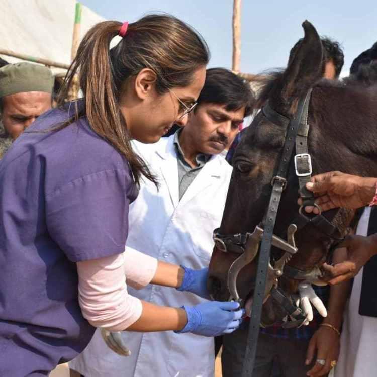 Akruti Choksi, the first horse dentist in India