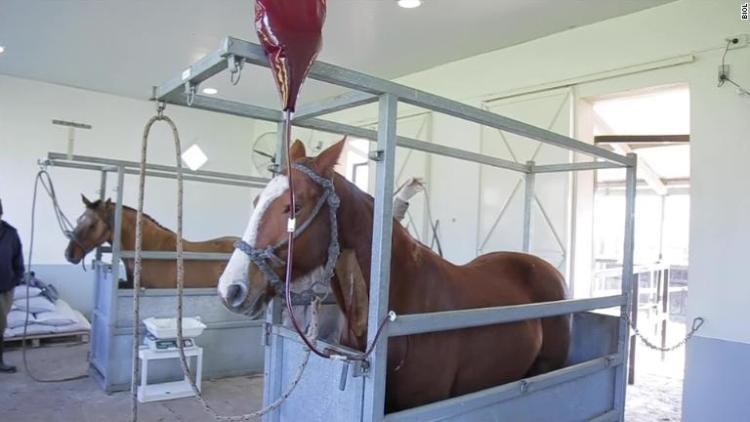 suero equino experimento en Argentina