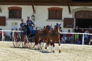 Freiberger - Los caballos de tiro ligero de Suiza