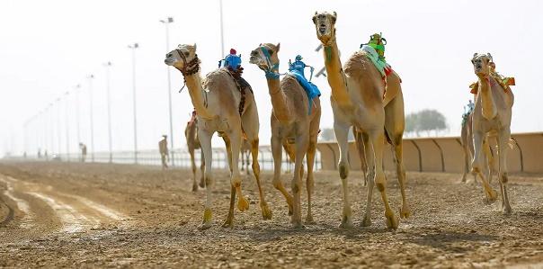 Al Marmoon Camel Racetrack en la memoria de Gustavo Mirabal