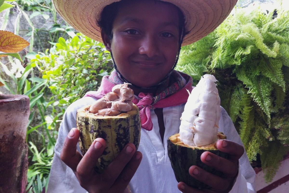 """México Gourmet en video conoce """"La Mazorca de Cacao"""" Hacienda Cacaotera Jesús María #MexicoGourmet"""