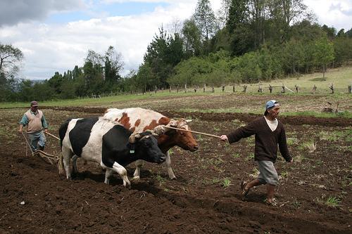 Agricultura campesina (Cortesía: radiodelmar.cl)