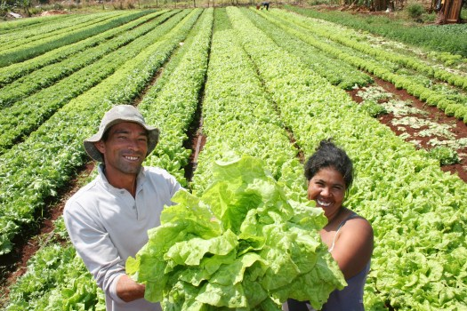 Agricultura familiar Cortesía: primicias24.com