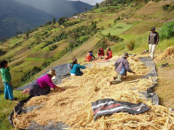 Cultivos andinos (Cortesía: cepesrural.lamula.pe)