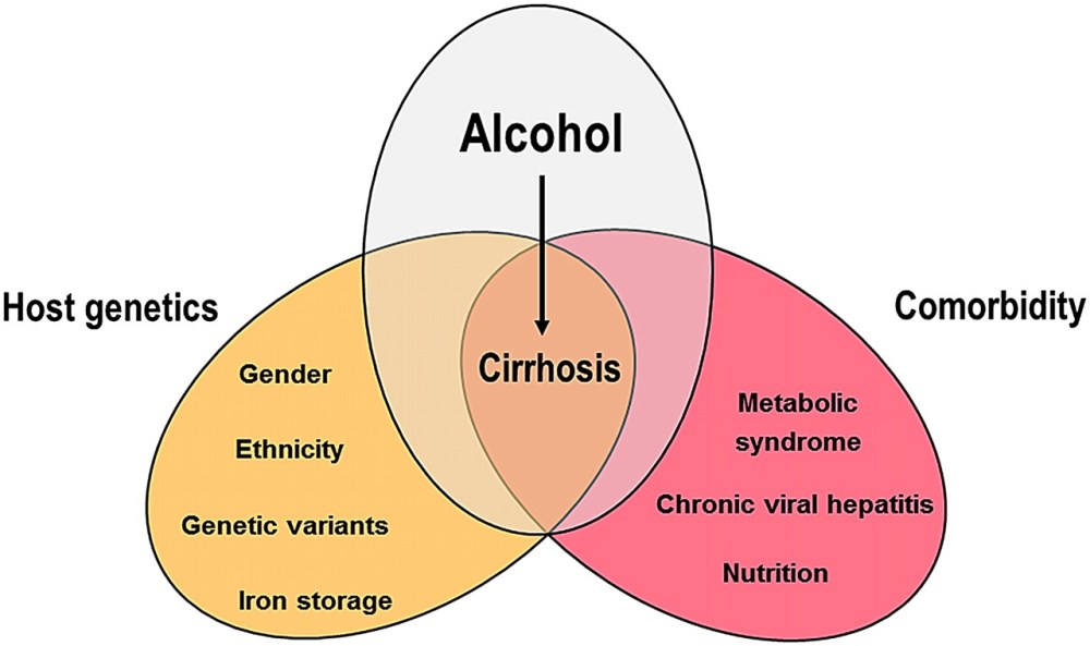 medium resolution of download figure open in new tab download powerpoint figure 1 schematic account of factors of progression in alcoholic liver disease