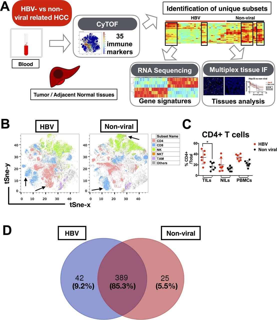 Cells Vs Viruses Venn Diagram Sort Answers
