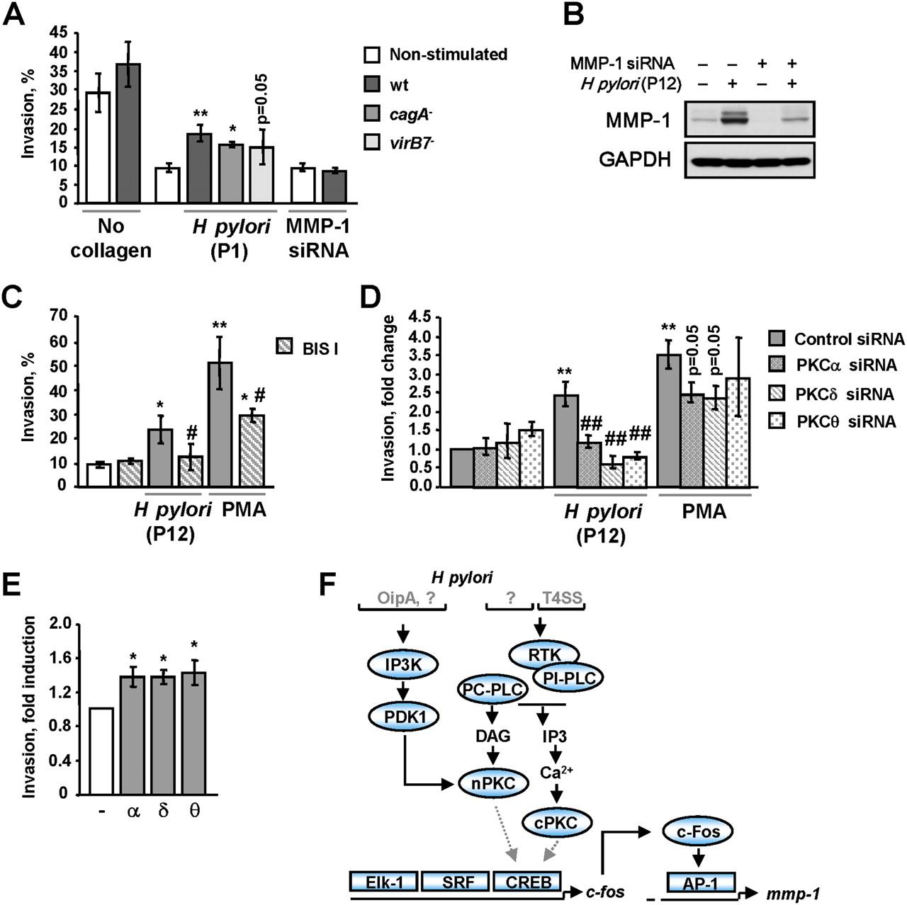 Protein kinase C isozymes regulate matrix