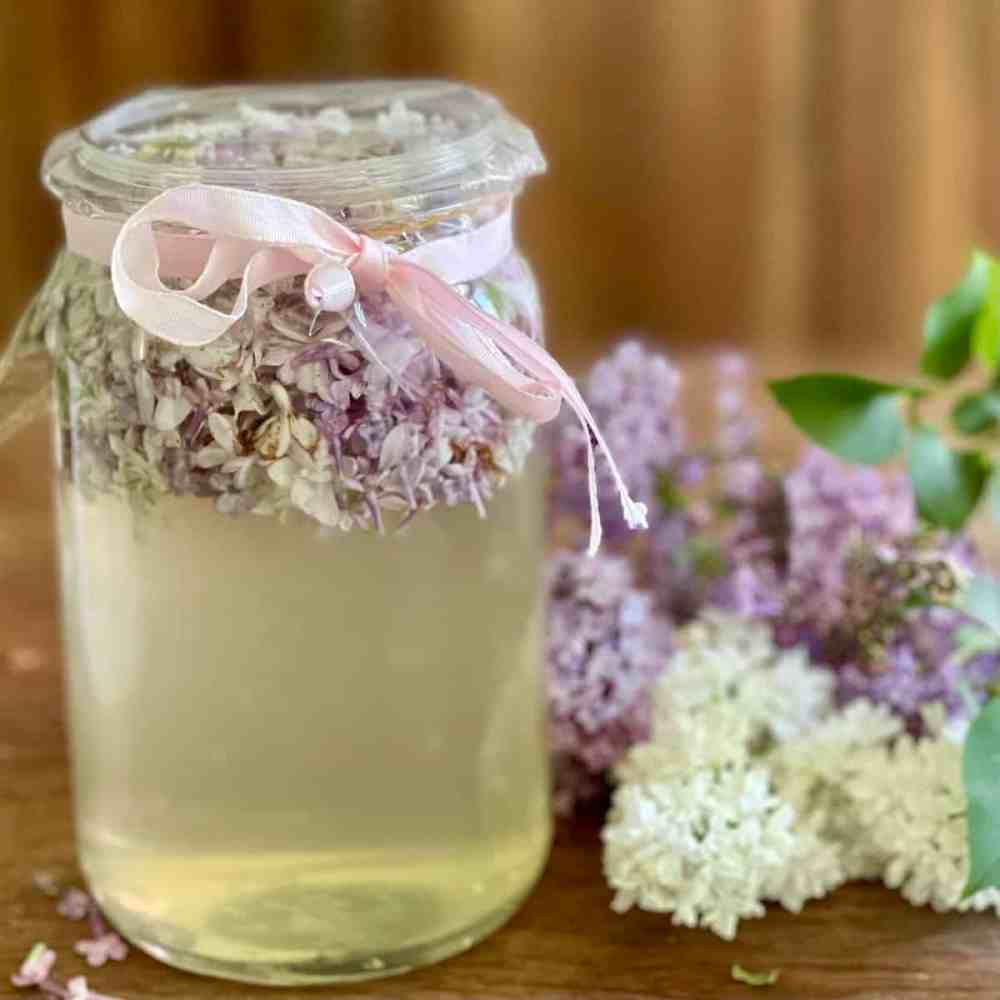 Fliedersirup - Frühling im Glas