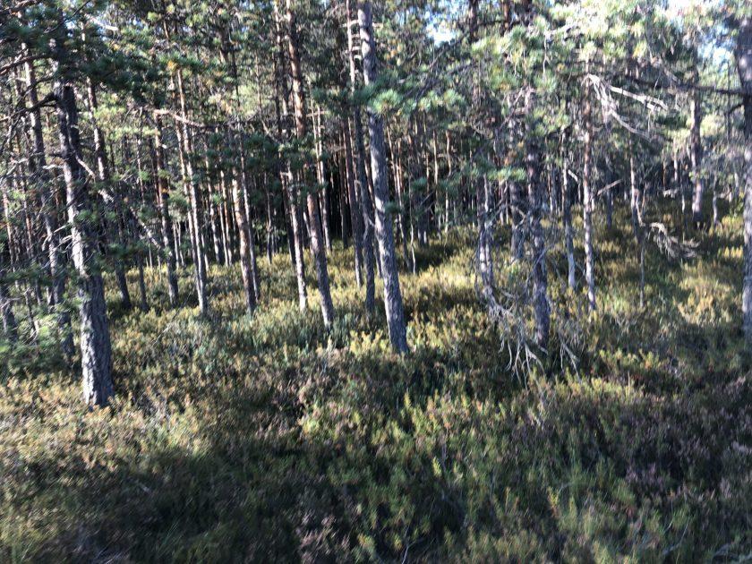 Auch die Bäume sehen hier anders auch, kahler, trockener und grau