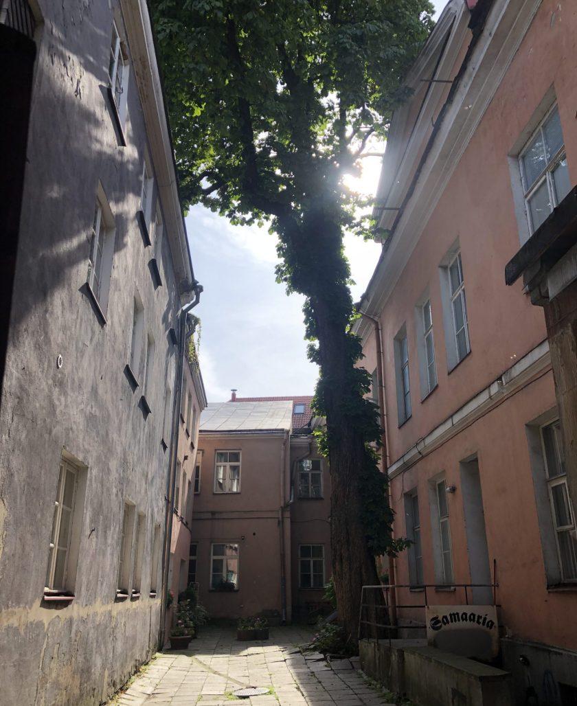 In Tallinn gibt es Hinterhöfe und romantische Gassen in der ein Baum wächst