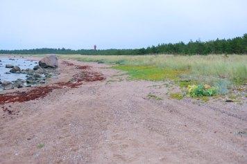 Spaziergang am Strand auf Hiiumaa