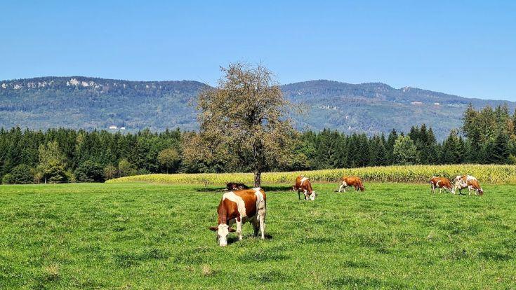 Blick in den Jura