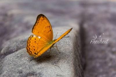 Schmetterling im Preah Khan