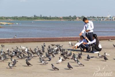 Und noch mal Tauben :)